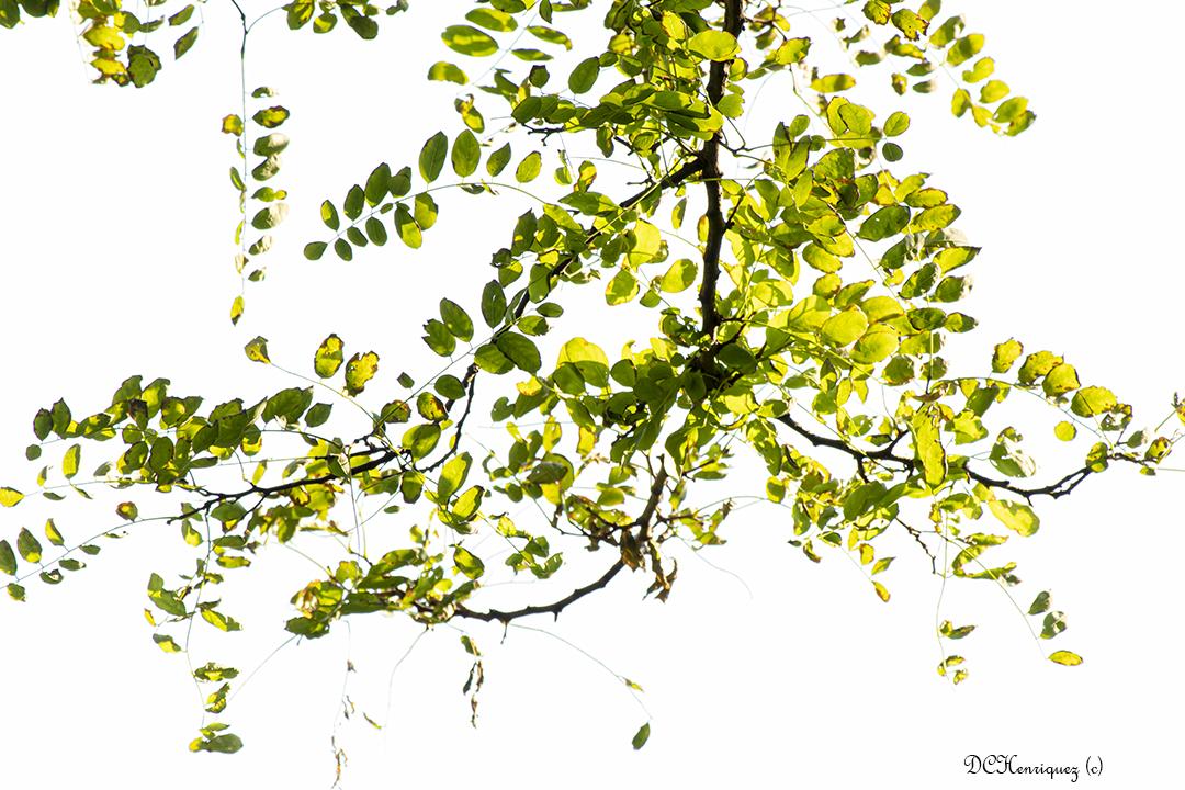 Onder een gordijn van groen/gele blaadjes