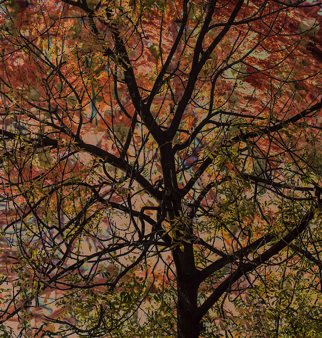 Kleurrijke boom
