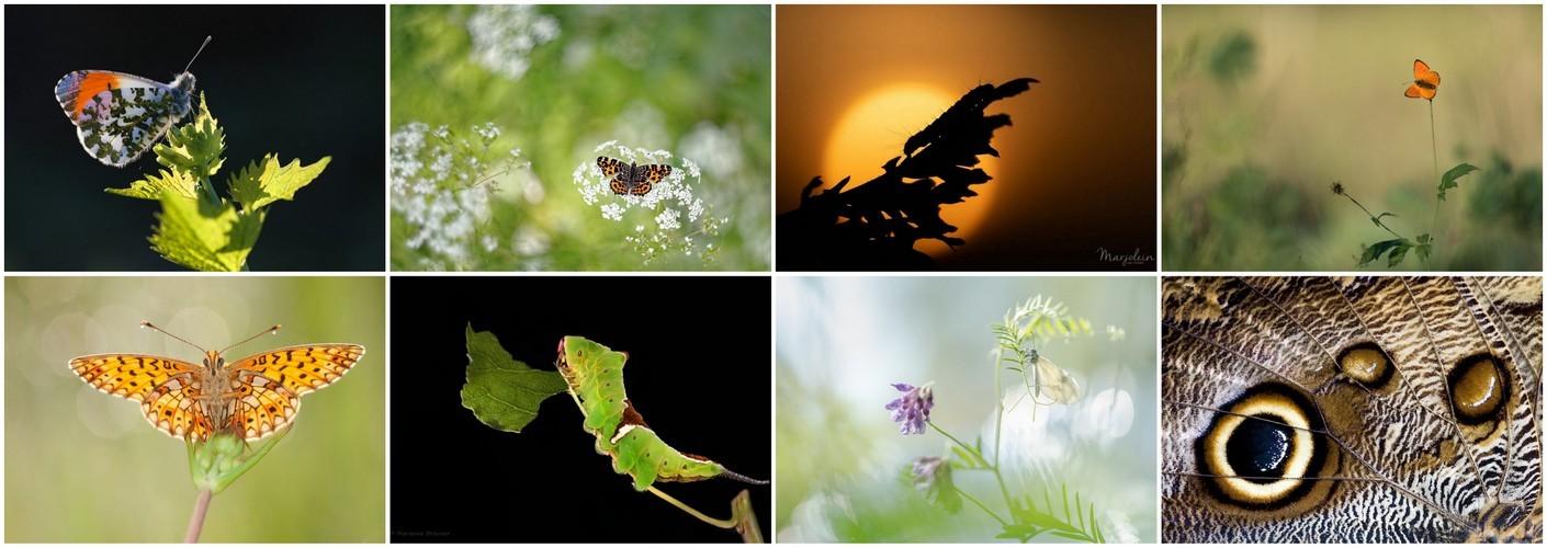 Thema van de maand augustus - Vlinders