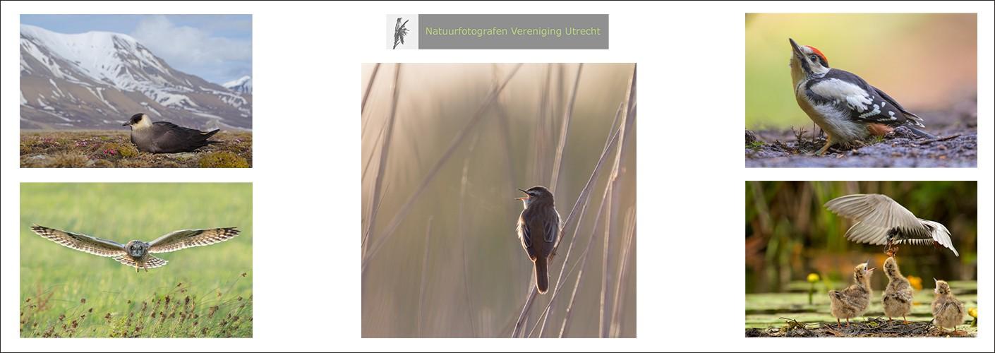Natuurfotografen Vereniging Utrecht