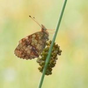 Profielfoto van koekieman