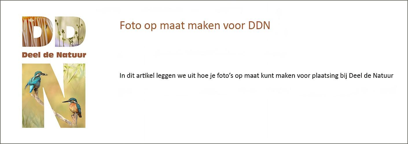 Foto op maat maken voor DDN