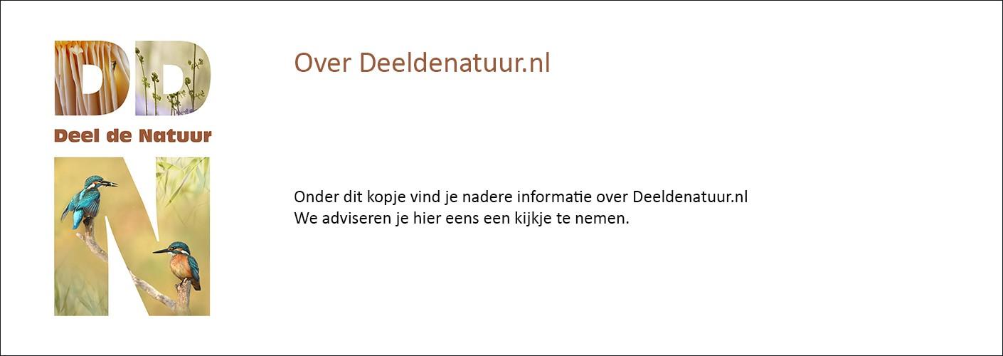 Over deeldenatuur.nl