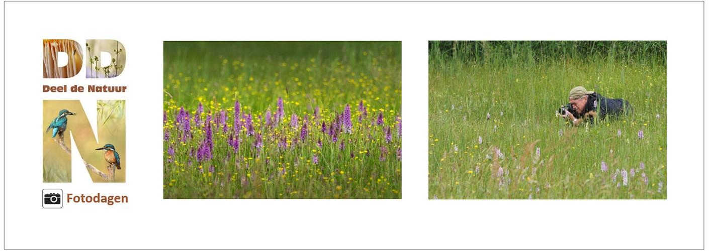 Verslag DDN fotodag wilde Orchideetjes
