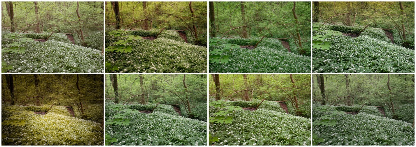 "Make-over ""Lentebos in bloei"""