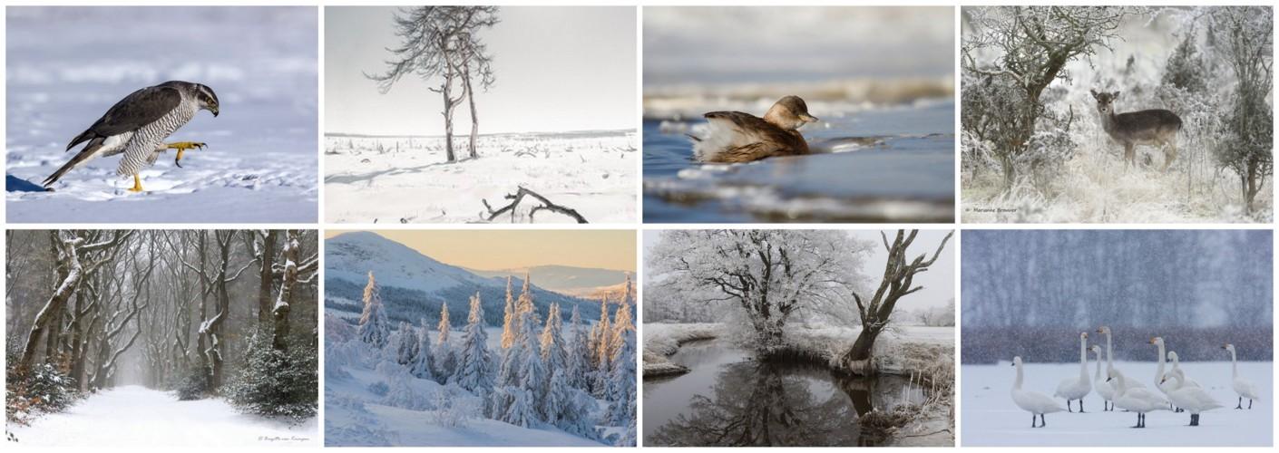 Thema van de maand februari - Winter