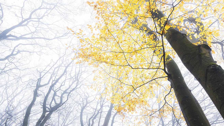 Odeaan de herfst