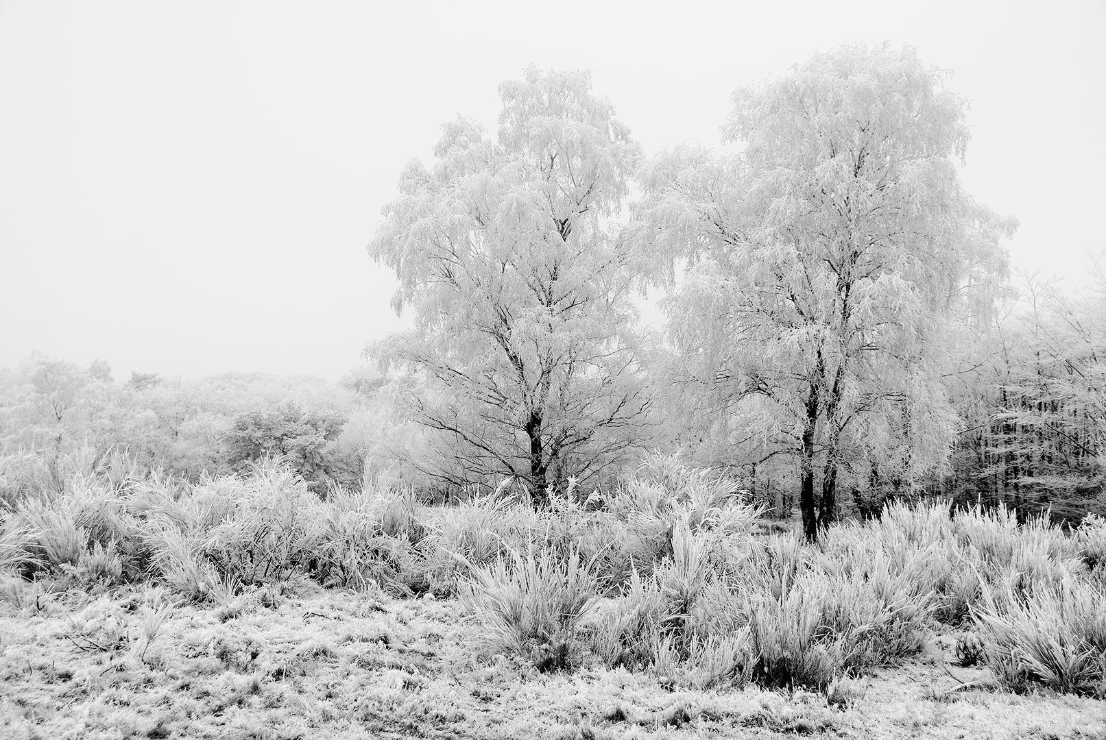sneeuw19