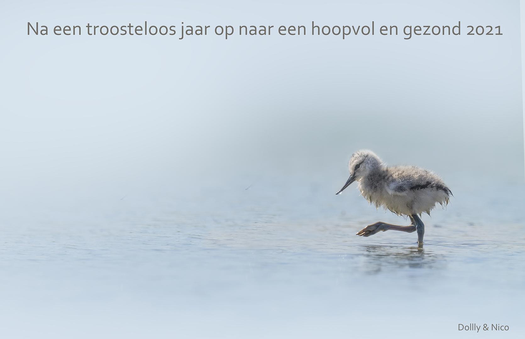 P5151041 Kluutje Murk Friesland 1080