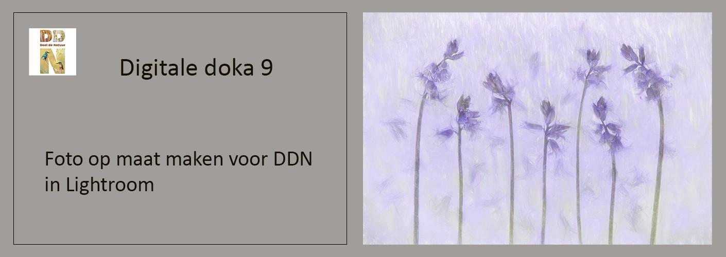 Foto op maat maken voor DDN in Lightroom