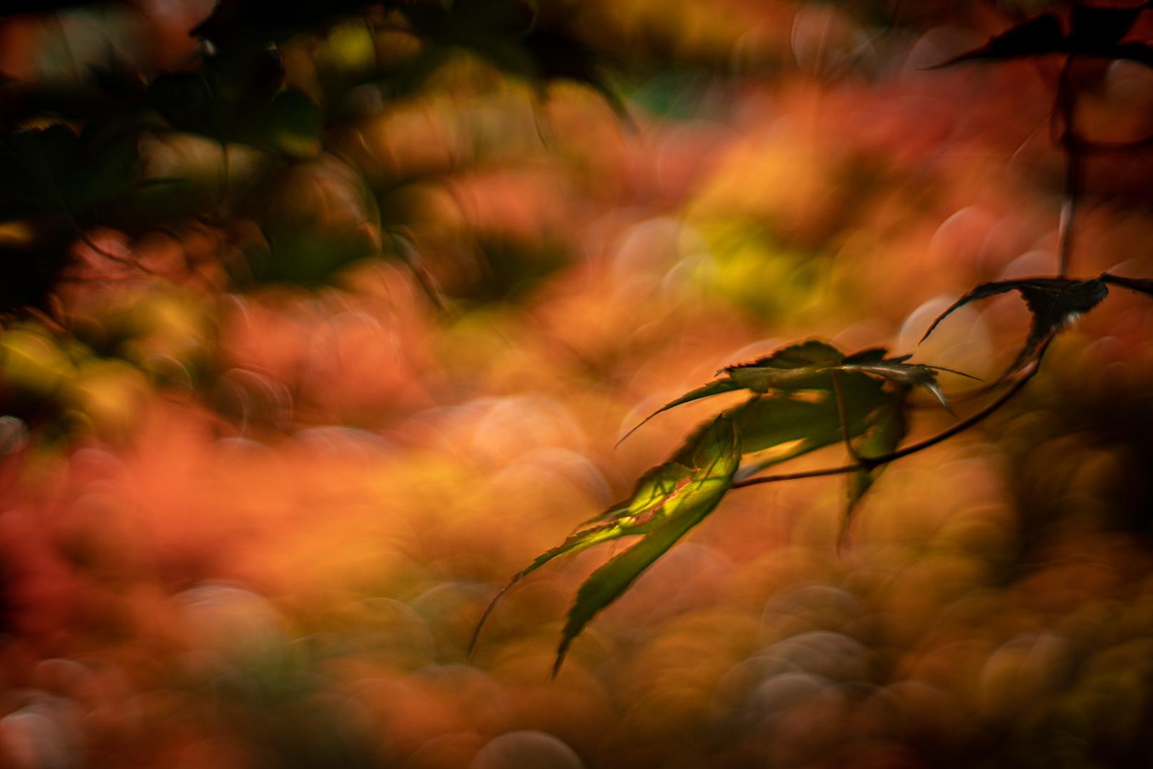 Kleur is de verwondering van het licht...