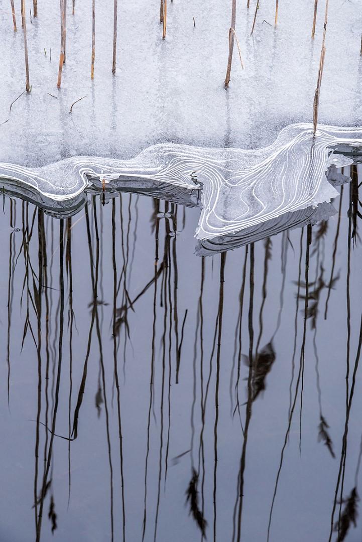 02 Gonnie van de Schans riet in ijs (Large)