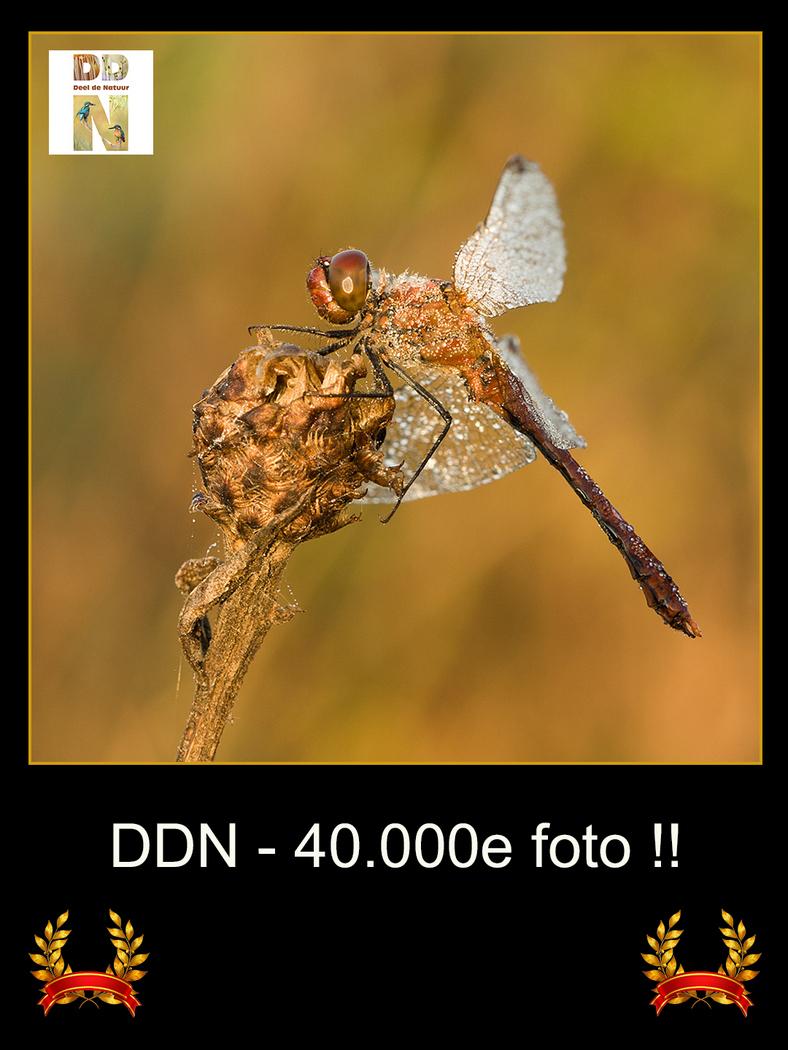 DDN 40.000e foto v2-001