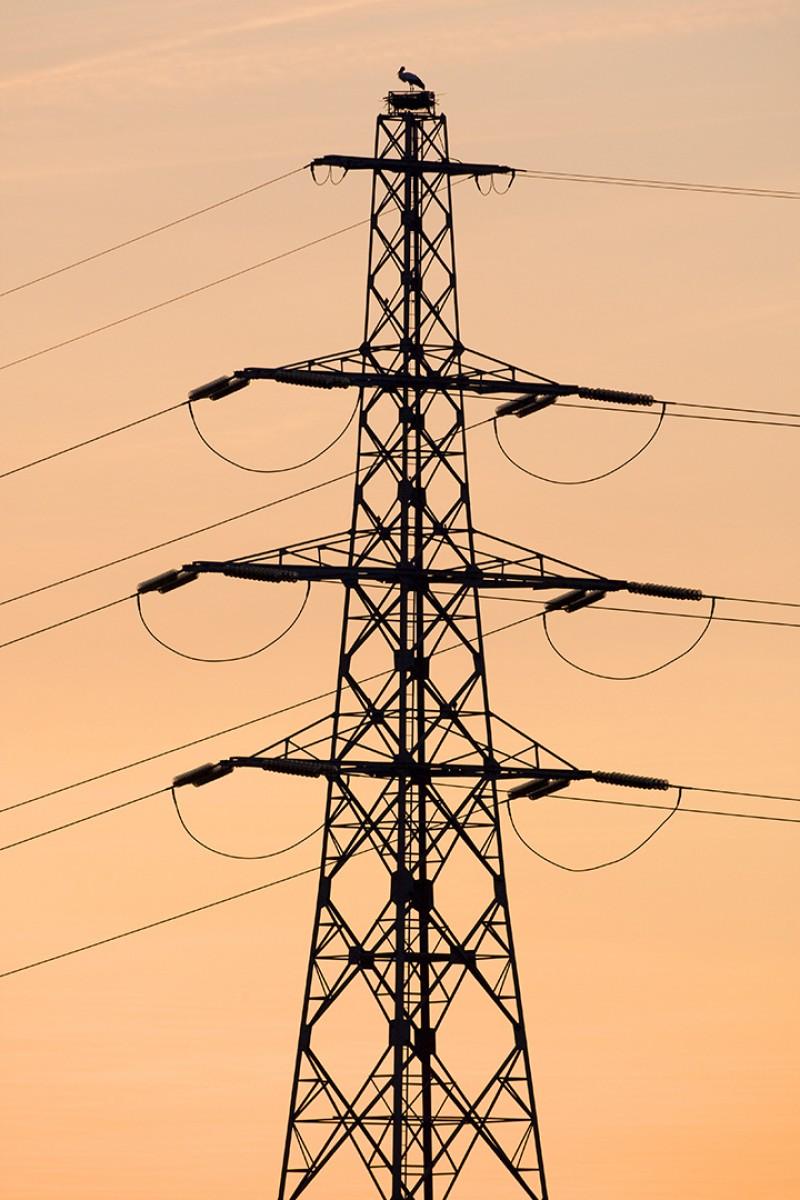 Ooievaar op elektriciteitsmast