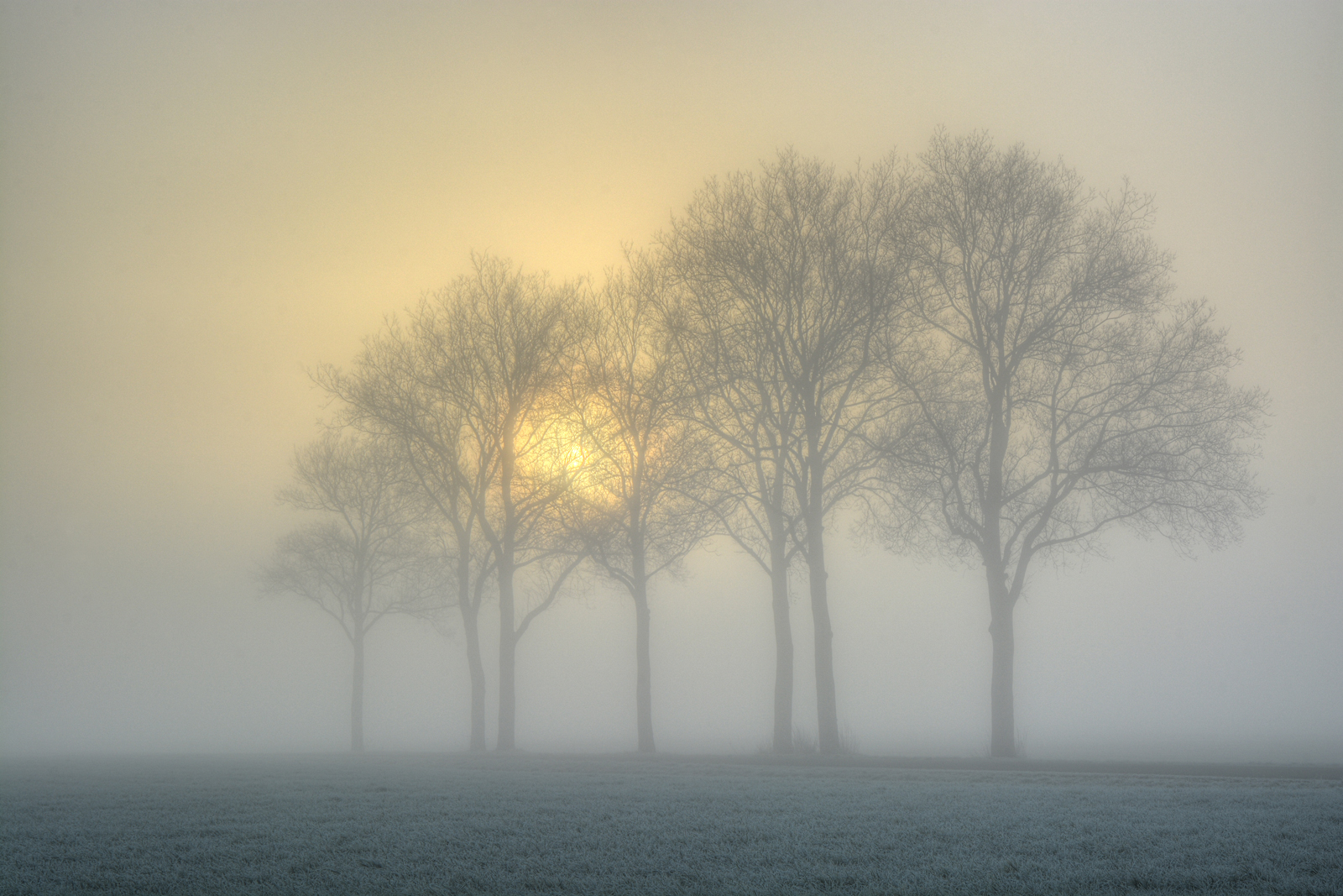 bomen aan Thijlingerhof HDR bw 1600