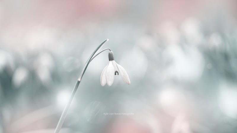Sneeuwklokje omringd door licht
