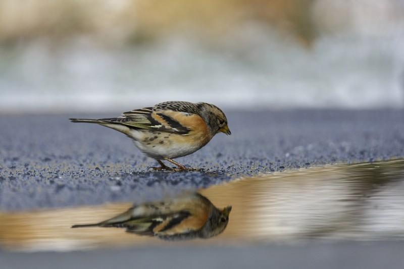 Spiegeltje spiegeltje in het land.