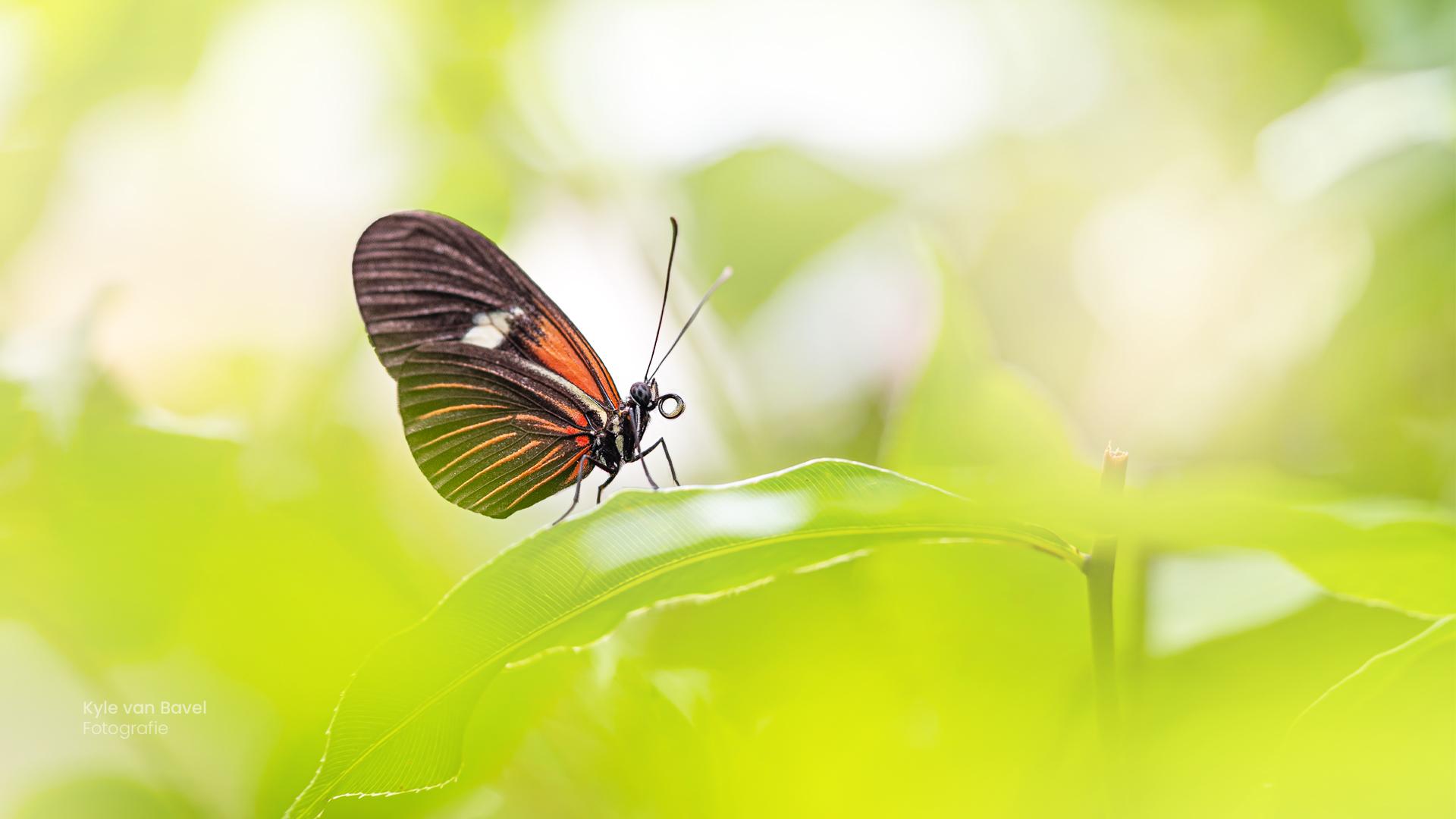 Vlinder-kleuren-pallet---re-edit-2021