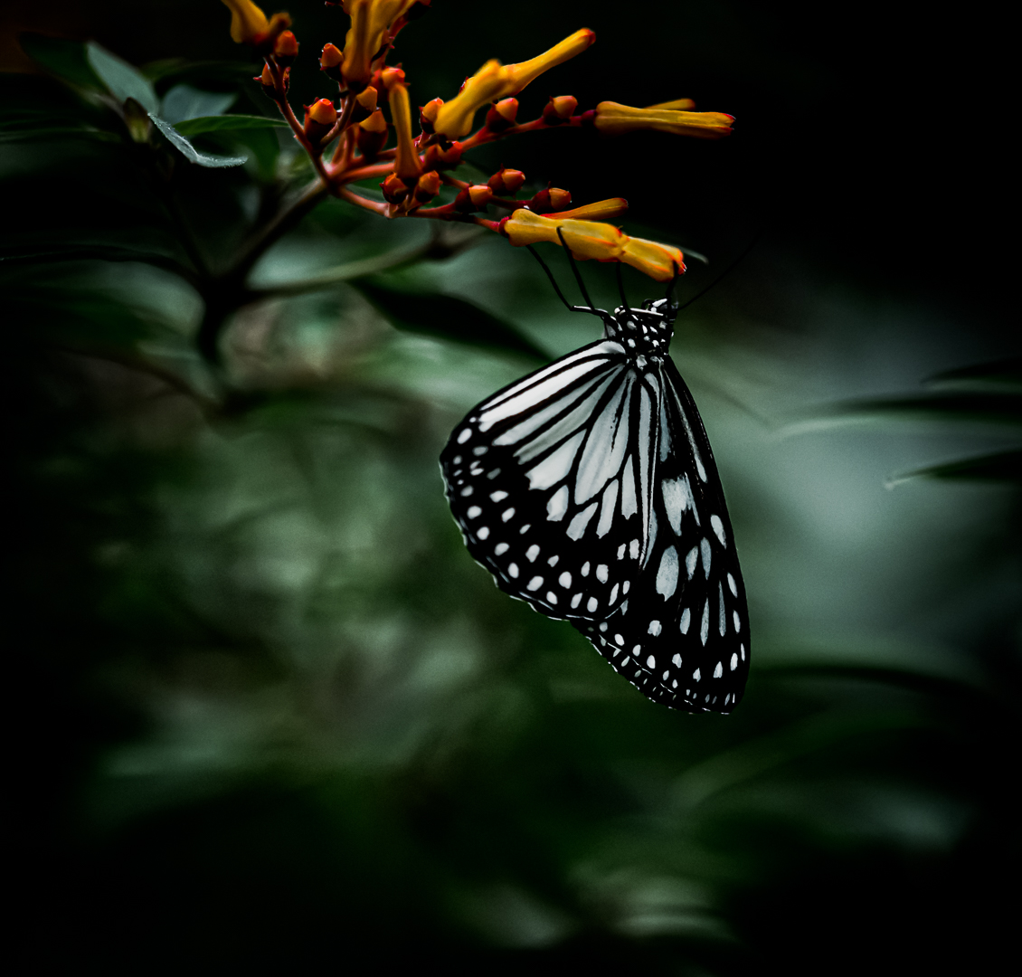 Dream sweet dreams, butterfly...