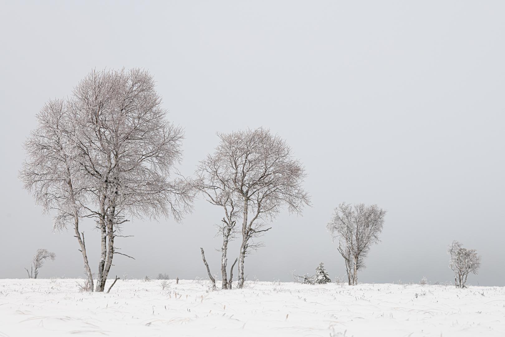 Sneeuw(voor)pret