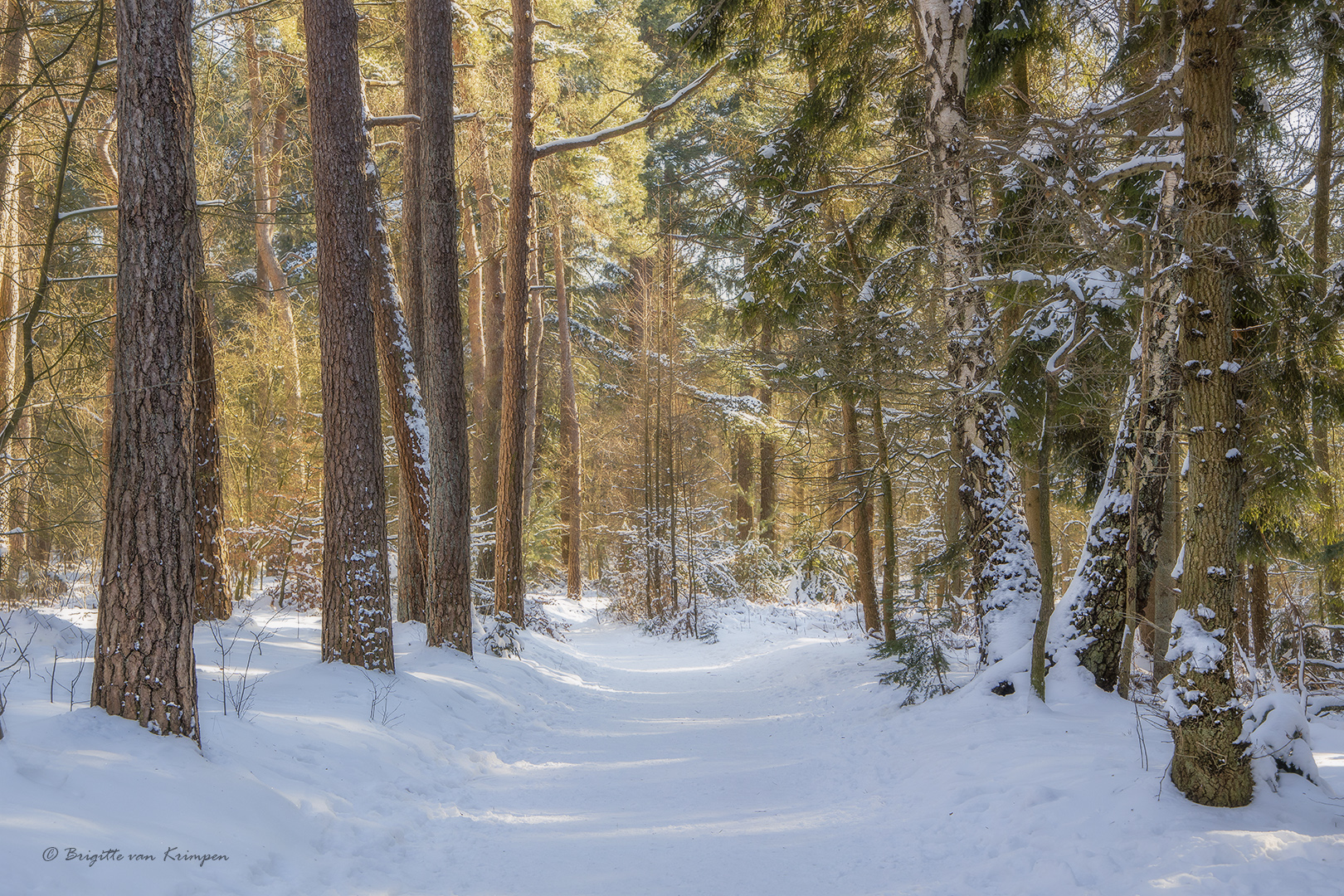 Winter Forest Mood