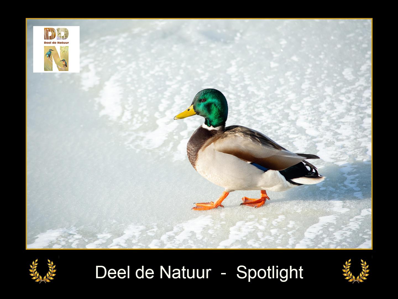 DDN Spotlight FB 18-02-2021