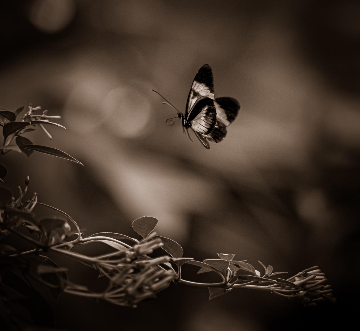 Dancing Flower...