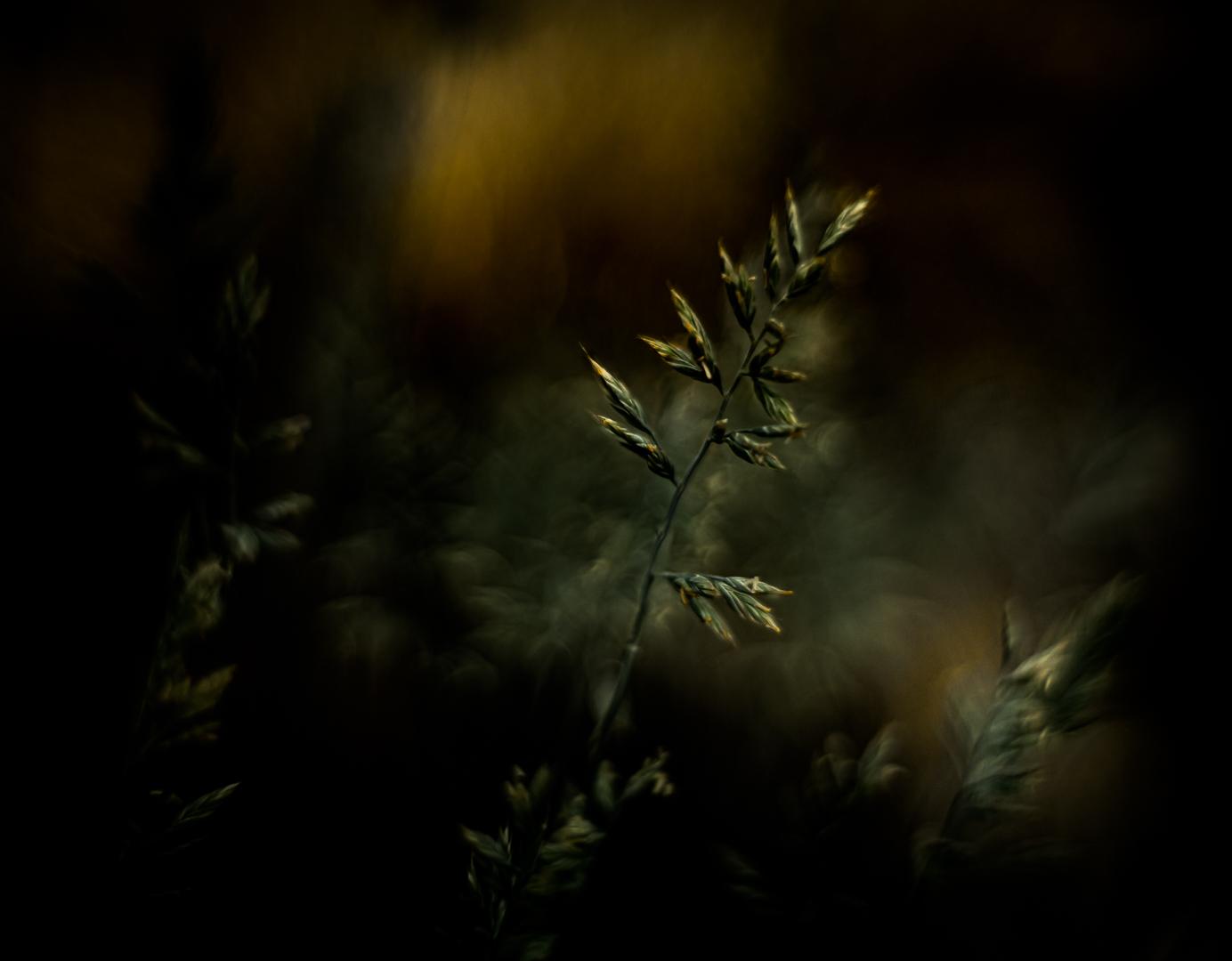 Gras belicht door ondergaande zon...