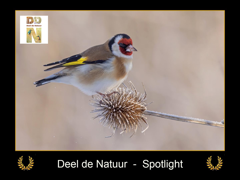 DDN Spotlight FB 23-02-2021