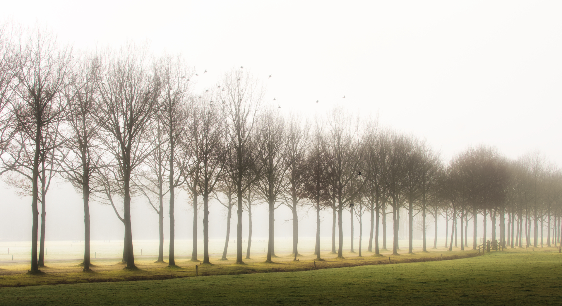 laatste beetje mist