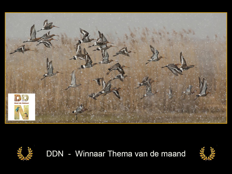 DDN Winnaar maanthema FB 02-2021