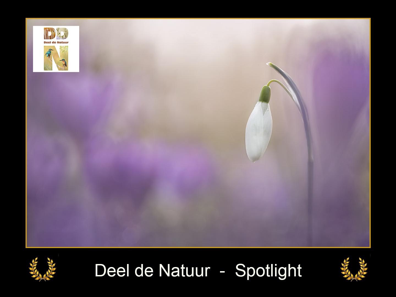 DDN Spotlight FB 04-03-2021