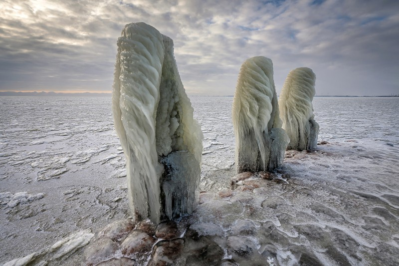 """""""Arctic Aliens"""""""