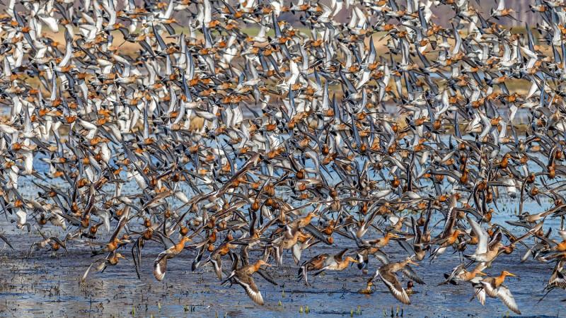 Chaos in de polder