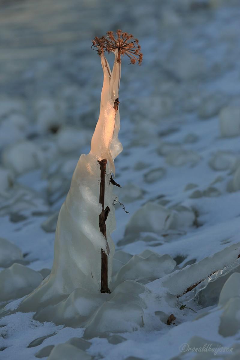 De aankomst van de ijskoningin