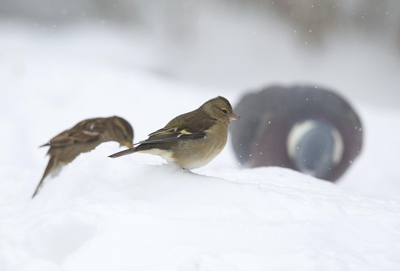 Speuren in de sneeuw