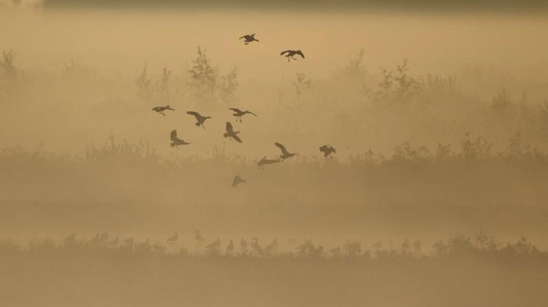 vogels in de mist