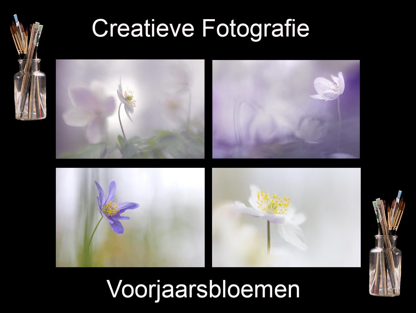 DDN Spotlight Voorjaarsbloemen v1