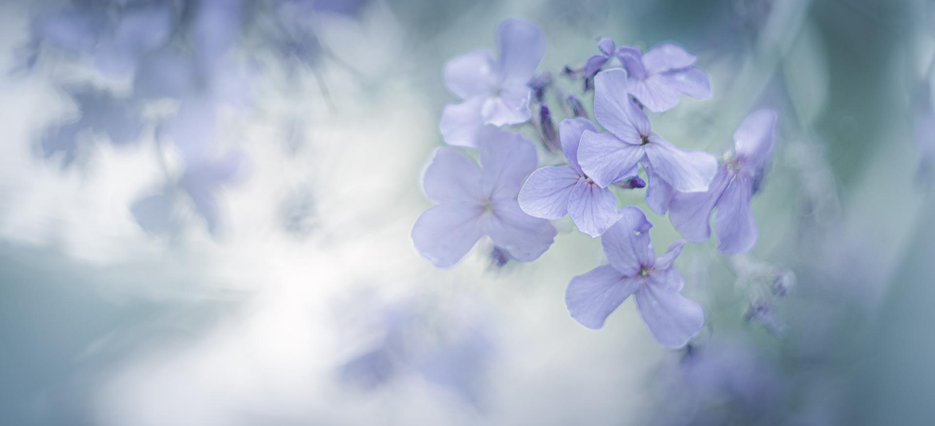 Dreamy flowers ...
