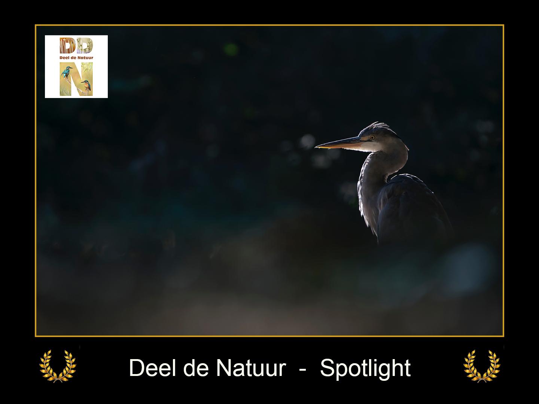 DDN Spotlight FB 17-03-2021