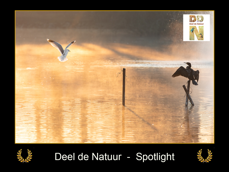 DDN Spotlight FB 19-03-2021