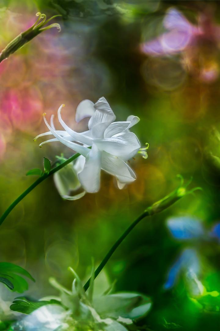 Flowers speak louder than words...