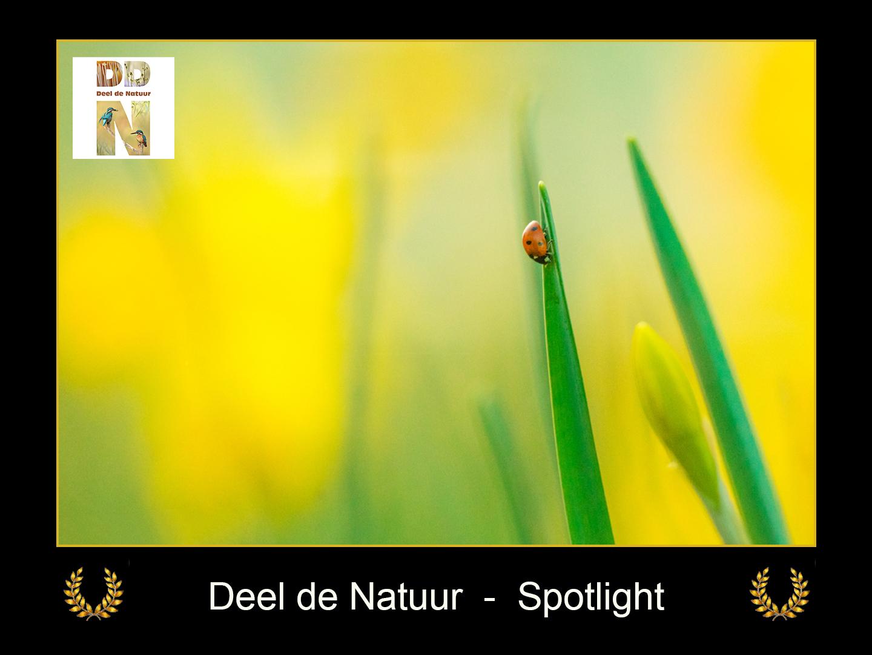 DDN Spotlight FB 04-04-2021