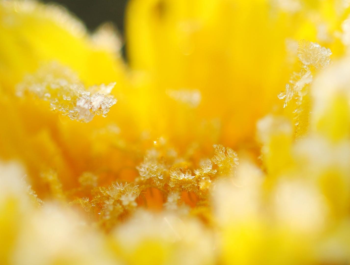 Bevroren lente kriebels