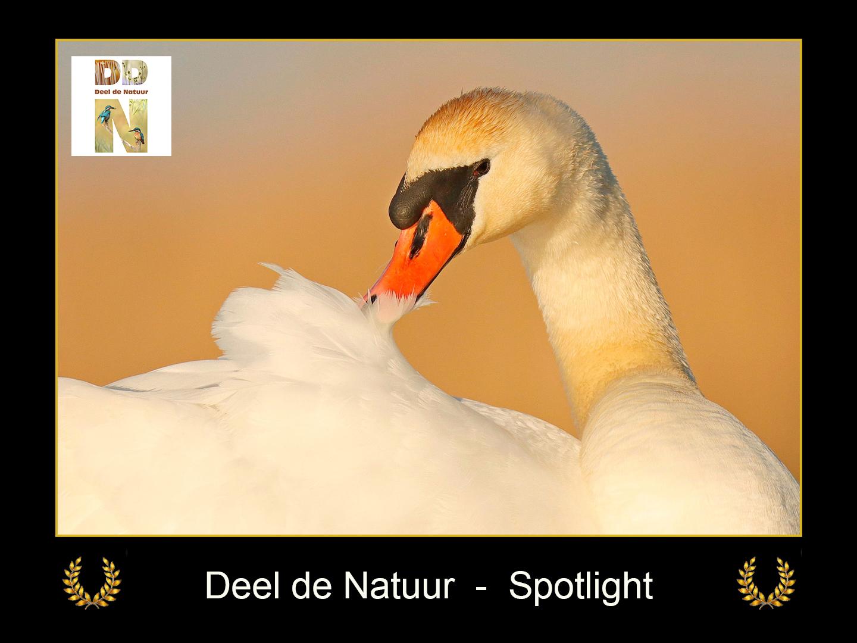 DDN Spotlight FB 08-04-2021