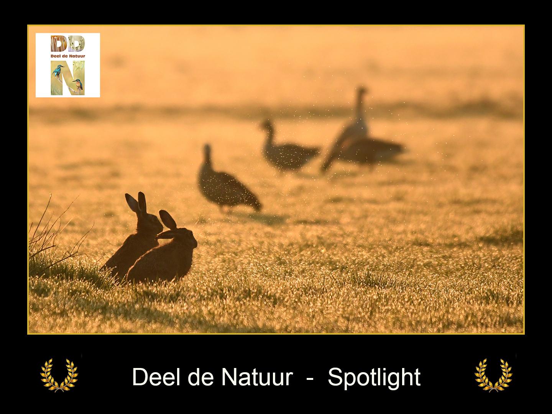 DDN Spotlight FB 09-04-2021