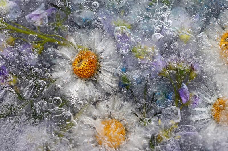 Bloemen in ijs