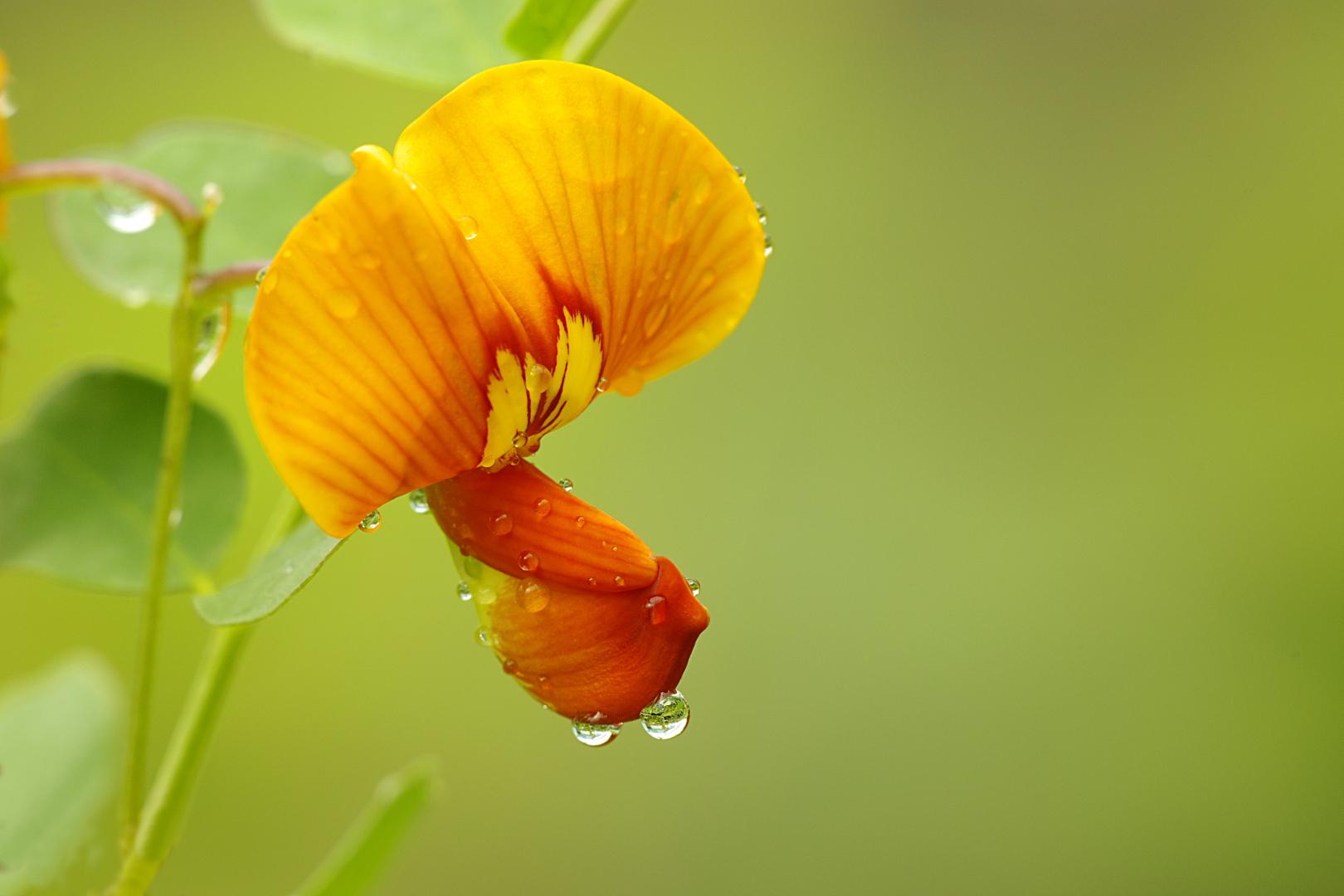 Zelfde bloem, niet gedraaid.