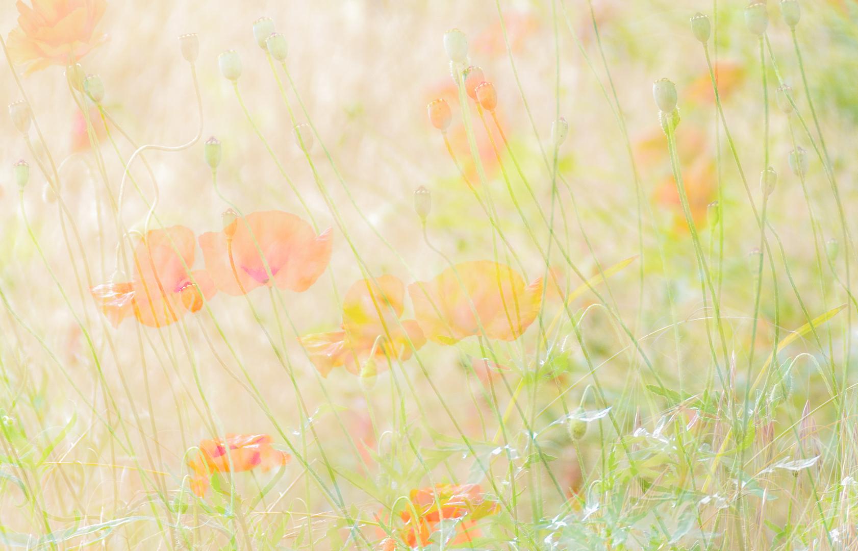 Dream in Pastel...