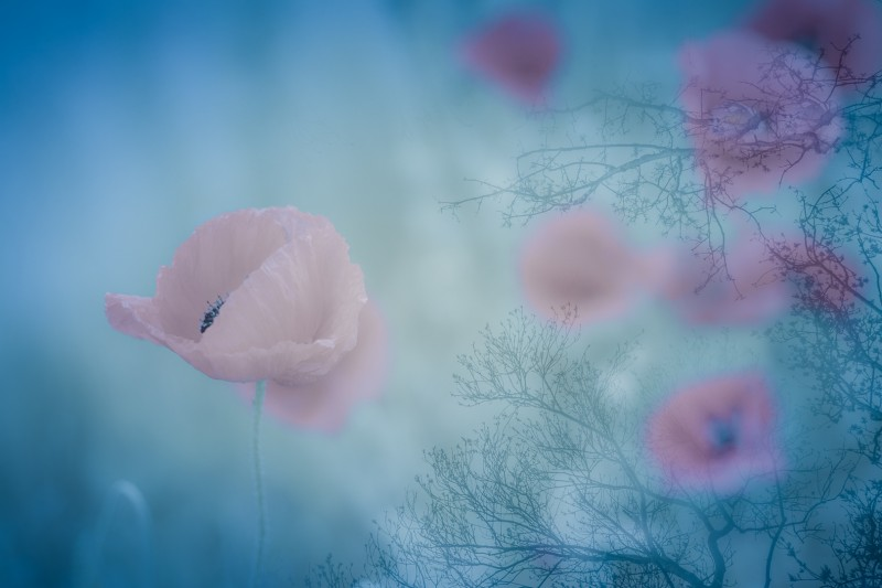 Forgotten Beauty...